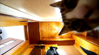 "Suspicious Nikita Cat - ""Hidden"" Camera"