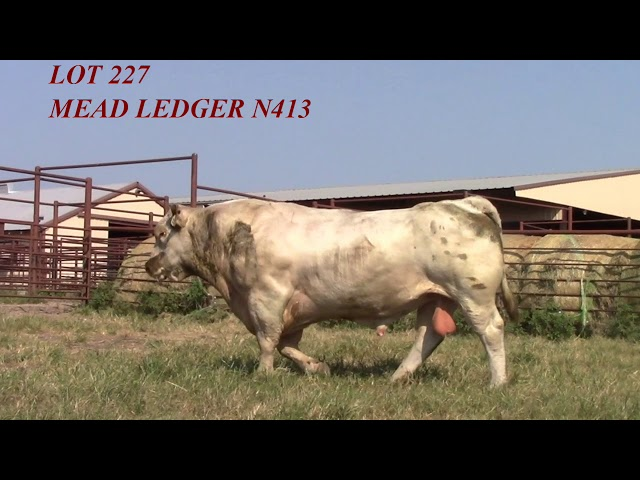 Mead Angus Lot 227