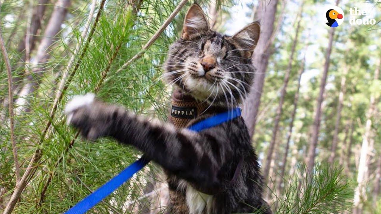Blind Kitten Grows Up To Be An Explorer - NINA  | The Dodo