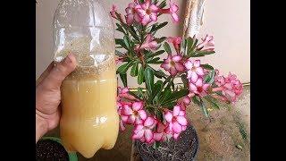 Incrível – Esse liquido faz sua planta florir e você só gasta 3 reais