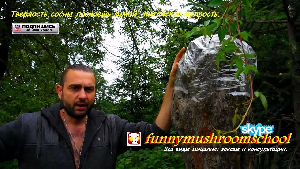 Грибы Весёлки -