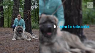 Dog training video - tips for choosing the right video to train your dog