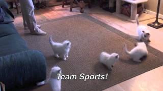 Neko Flies Interactive Cat Wand Toys - Cat Teaser Wand Toys - Exercise for Your Cat - Nekochan