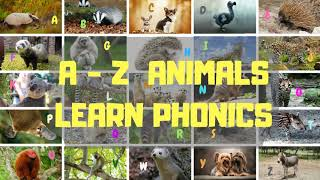 Learn Rare Animal Names & Phonics | A  - Z Animals