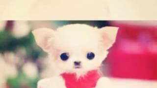 10 Самых милых фото собак