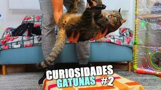 CURIOSIDADES DE LOS GATOS 2