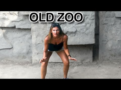 The Old Abandoned Los Angeles Zoo in Griffith Park California VLOG