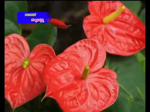 flower cultivation and Ornamental seed protection-kannada