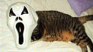 РЖАЧ! угарные картинки с котами/ Приколы с кошками
