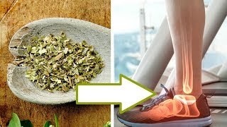5 Health Benefits of Oregano | Detoxifies the Body and more!