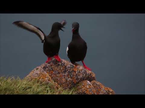 Птицы Русской Арктики