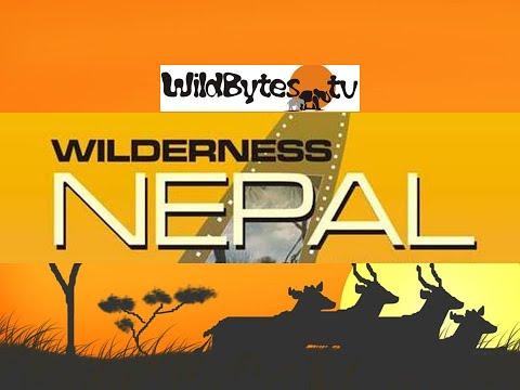 Wilderness Nepal-A documentary set in Chitwan National Park