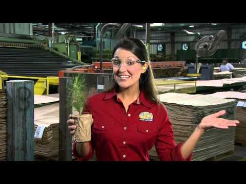 Timber | Job Hunter | MPB