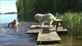 FUNNY And CUTE Animals Being Jerks Compilation! (Watch And LAUGH 2017)