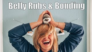 How to Bond and Build Trust with your Hedgehog | Belly Rubs (Tutorial)