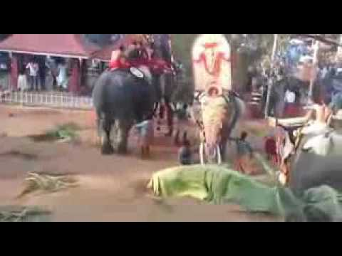 3 - Elephant attack kerala thrissur thiruvthra Temple ...