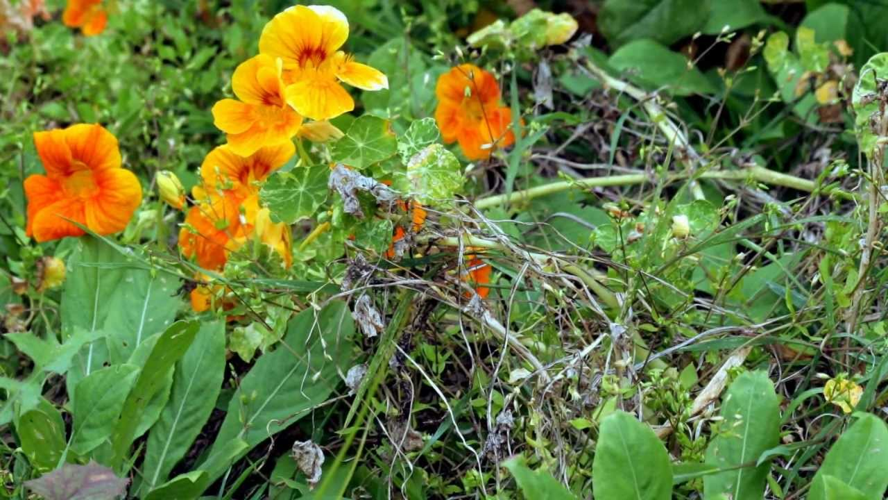 plantas flores frutos