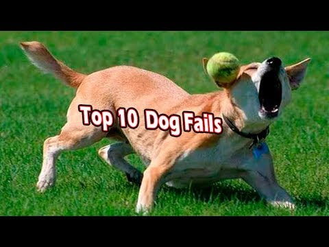 top 10 dogs that fail at being dogs