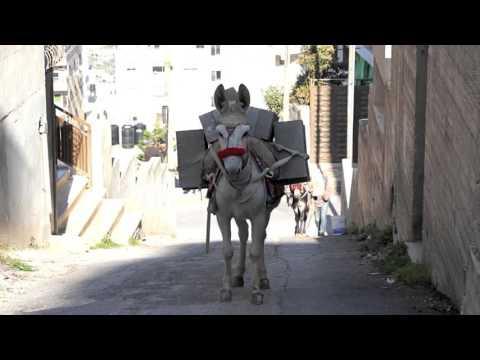 The Builder Donkeys