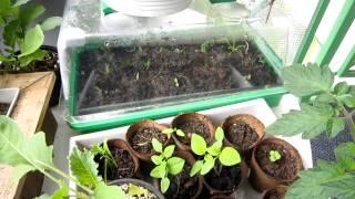 Balcony And Window Ledge Vegetable Garden Part 2 Update