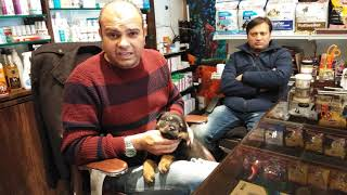 Do Rottweilers are really very Aggressive Dogs not to keep with kids by Baadal Bhandaari 9878474748