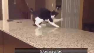 Короткие Видео Приколы 3 (Демонский кот)