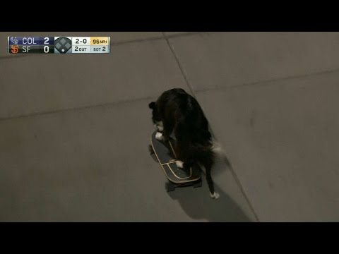 Skateboarding dog makes an appearance