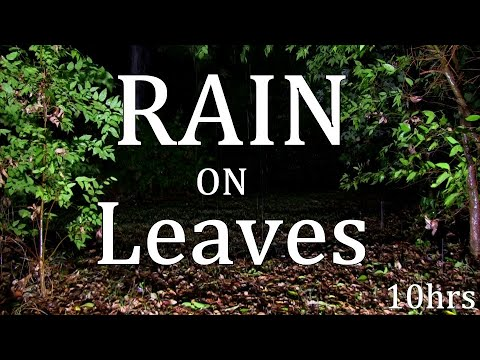 """10hrs Rain on Leaves """"Sleep Sounds"""" 