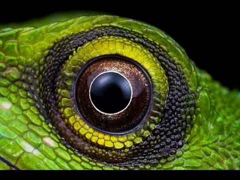 Lizard eye by Ziano-rein on DeviantArt