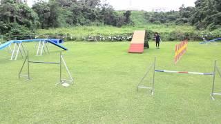 Okinawa Dog Training Schoolは、 沖縄自動車道「沖縄北IC」近く。沖...