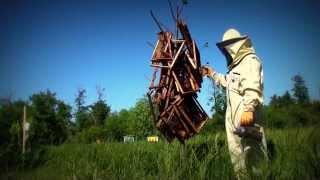 Профилактика болезней пчёл, обработка рамок
