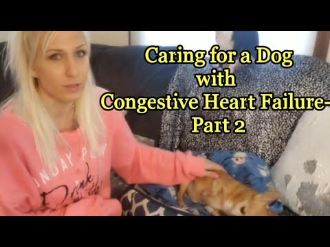 caring-for-a-dog-with-congestive-heart-failure--part-2