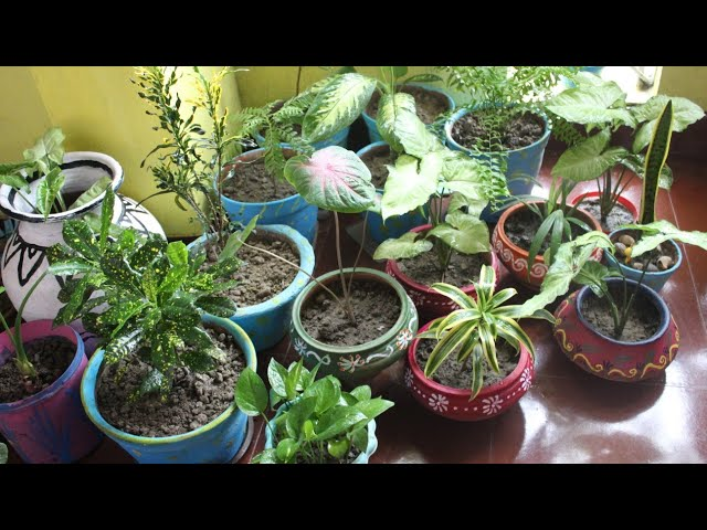 ?? ?? ??? ?? ????? ???? ?? ??....????? ?? ????...#  How to care Indoor plants easyly