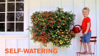 Woolly Pocket Living Wall Planter - Garden House Design