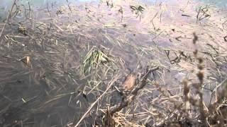 6) Costa Costella - Утро в Серебчике! ) - 27.04.13 - Водное млекопитающее! :)