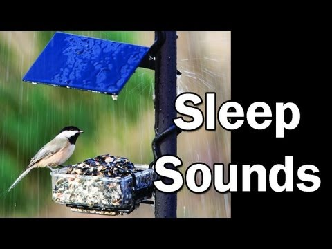 Morning Rain Storm with Birds Singing, Relaxation Sleep Aid Sound Effect Nature