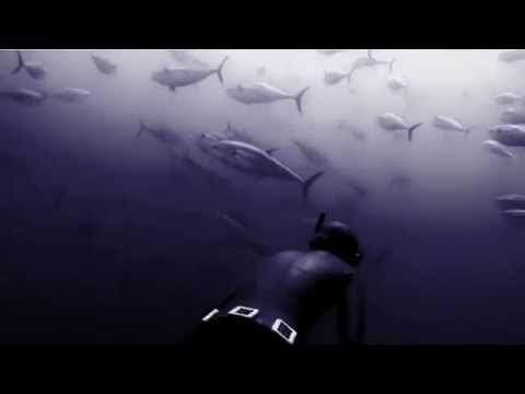 Freediving with Tunas in the Atlantic Ocean - Deep Blue Video