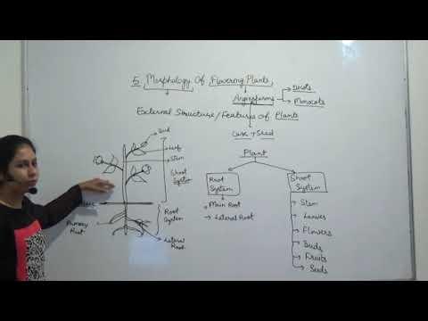 5 1 Plant Morphology
