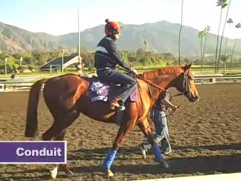 2009 Breeders Cup Action From Clockers Corner At Oak Tree
