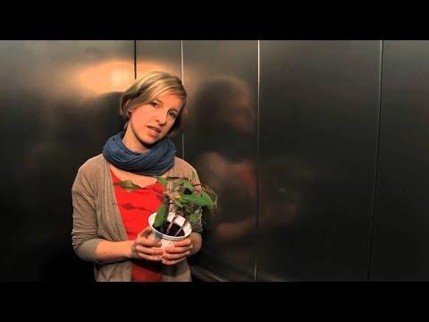 HZDR DocClip (ENG): Elisabeth Fischermeier – Copper transport in cells