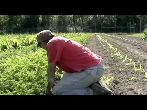 Farmer Anne Schwartz of Blue Heron Farm (part 1 of 2)
