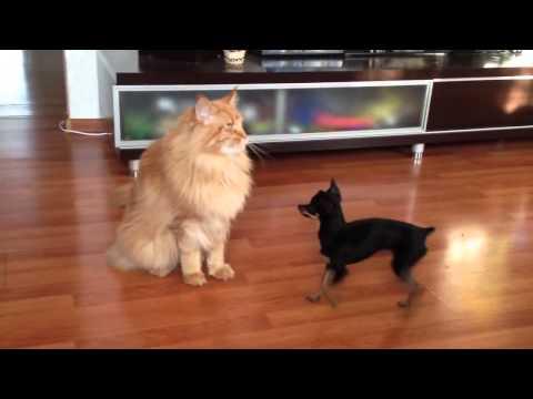 маленькие собаки прикол
