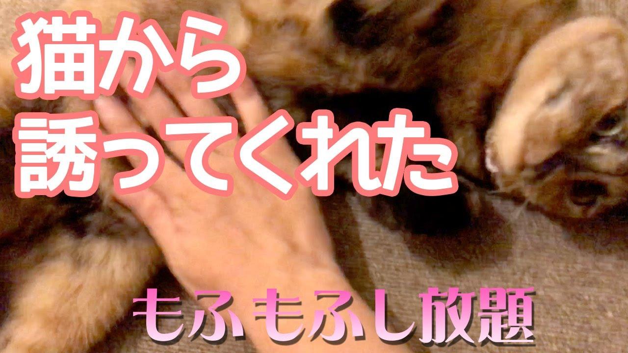 猫から誘われたらもふるしかないではないか