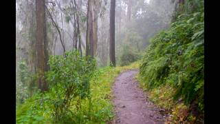 Volunteers Restore Historic Trail