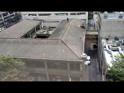 Man getting dive bombed by crows on a roof in Seattle