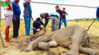 Фото This Is What Compassion Looks Like. Saving A Young Elephant From Its Faith