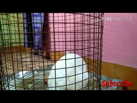 Our Loving Birds Pets Hindi Channel Introduction....