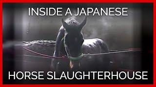 raw-footage-of-a-thoroughbred-inside-a-japanese-horse-slaughterhouse