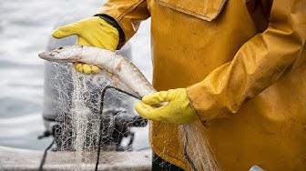 Les poissons se font rares dans les lacs suisses. ABE-RTS