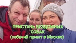 ПРИСТАНЬ БРОШЕННЫХ СОБАК.1.приют в Москве.